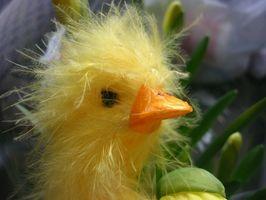 Comment faire un incubateur oiseaux