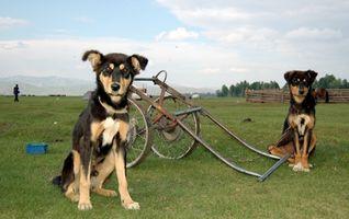 Comment transformer un Gardenway Panier Dans un panier pour chien