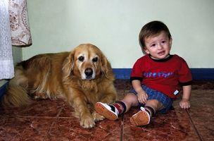 Comment introduire un nouveau bébé à un chien agressif
