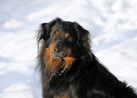 Chlorure de calcium et chiens