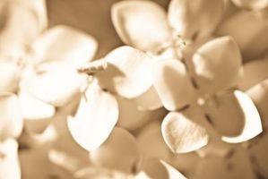 Fleurs pour les paramètres de table pour un mariage