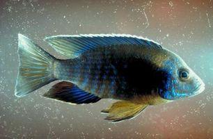 Aquarium Filter Faits