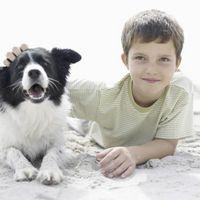 Comment puis-je faire mes enfants plus à l'aise autour de nos chiens?