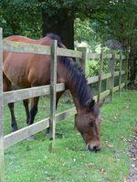 Problèmes d'estomac chez les chevaux