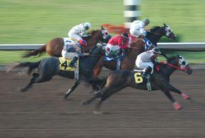 Un vétérinaire Tech peut effectuer des traitements sur des chevaux de course?