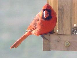 Activités enfants avec Cardinals