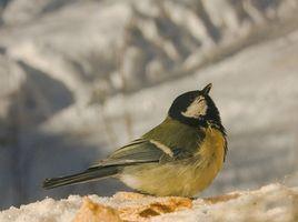 Comment faire mangeoires d'oiseaux comestibles Complètement