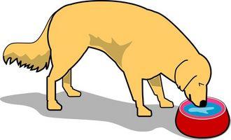 Médicaments pour traiter l'hyperlipidémie Canine