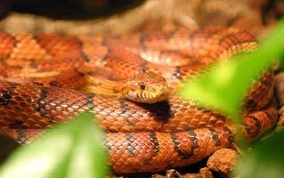 Comment faire face à votre peur des serpents