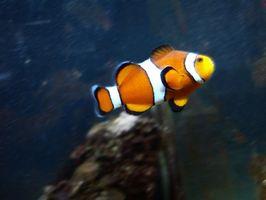 """Comment faire pour trouver les noms des personnages dans """"Le Monde de Nemo"""""""