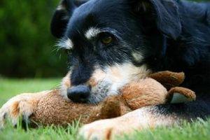 Exercice pour chiens stérilisées