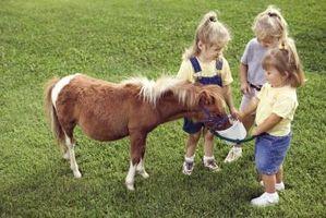 Comment Dessinez un cheval Mini
