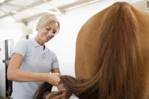 Comment épaissir la queue de mon cheval, avec l'autorisation en Climatiseurs et sans l'aide d'un Tail Bag