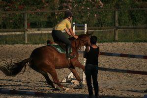 Supplément pour traiter les ulcères d'estomac chez les chevaux