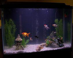Types de plantes Aquarium Champignon