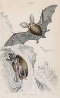 Que fait un Bat Eat?