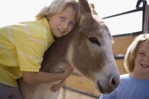 Comment Coupez un âne
