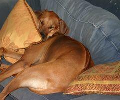 Canine Relocation Anxiété