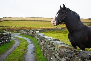 """Soluce pour Comment garder un cheval dans """"Oblivion"""""""