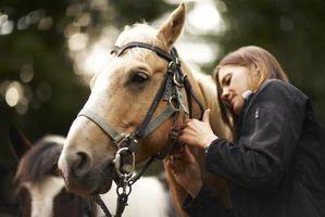 Comment pouvez-vous dire si un cheval a Worms?