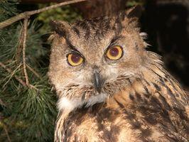 Informations sur Pellets Owl