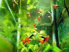 A besoin d'un Fish Tank saumâtre Filtres spéciaux?