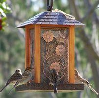 Comment les oiseaux trouvent-Mangeoire?