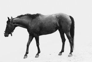 Types de thérapie au laser pour les chevaux
