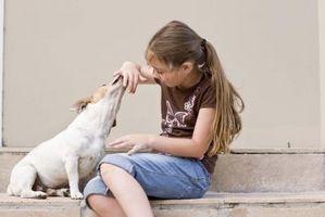 Comment combattre la plaque et tartre chez les chiens