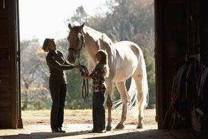 Comment traiter avec Proud Flesh chez les chevaux