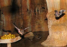 Faits sur la Jamaican Fruit Bat