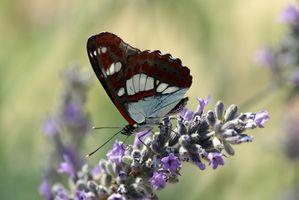 Jeux de fête d'anniversaire de papillon