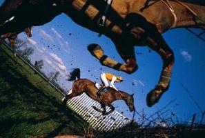 Comment se préparer pour vos épreuves premier cheval Novice