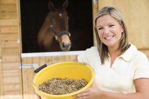 Sodium, Calcium et magnésium Rich Foods pour chevaux