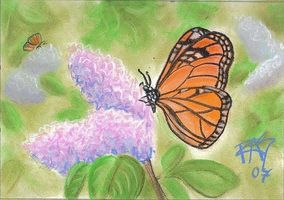Comment dessiner un papillon dans pastels tendres - Comment dessiner un papillon ...