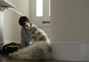 Comment enseigner les enfants autistes se comporter avec les chiens