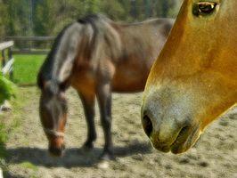 Types de Moules causés par l'alimentation des chevaux à sec