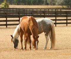 Comment régler les Forks formation à la mise une tête de cheval