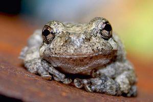 Différents Habitats Frog