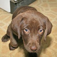 Comment se débarrasser de Puppy Constipation
