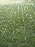 Informations sur le Palm Araignée