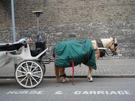 Comment dresser un cheval pour tirer une charrette