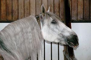 Que faire quand un cheval est coulé dans sa stalle