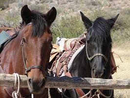 Comment dresser un cheval de Cross Tie