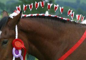 Styles de Tressé crinière d'un cheval