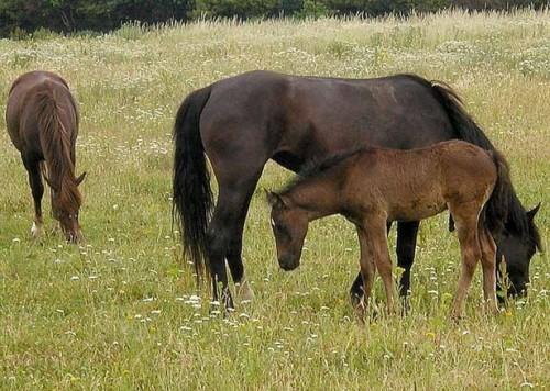 Maladies de reproduction de chevaux