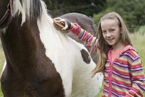 Toilettage un cheval: Quels sont les brosses et outils essentiels?