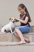 Information sur les produits antipuces pour chiens