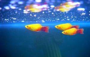 Pourquoi un aquarium de poissons Always Be nuageux?