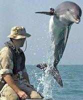 Comment les Dolphins combat?